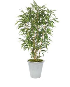 8' Bamboo Tree in a White Stoneware Container