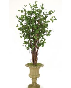 7.5' Elm Tree in Tan Classic Urn