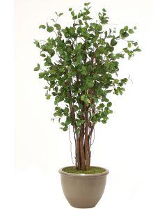 7.5' Elm Tree in Brown Stoneware Planter