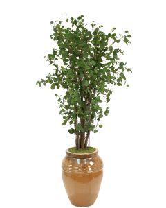 7.5' Elm Tree in Tall Mocha Earthenware Water Jar