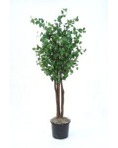 7.5' Elm Tree Liner