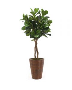 6' Fiddle Leaf Tree in Tapered Rattan Basket