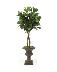 6' Fiddle Leaf Tree in Rust Fiberglass Urn