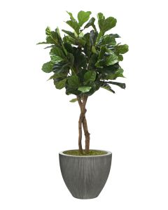 6' Fiddle Leaf Tree Dark Grey Vertically Ridge Planter