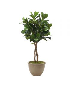 6' Fiddle Leaf Tree in Brown Rimmed  Stoneware Planter