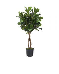 6' Fiddle Leaf Fig Tree in Liner