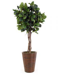 7' Fiddle Leaf Tree in Tapered Rattan Basket