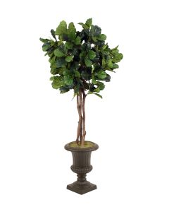 7' Fiddle Leaf Fig Tree in Rust Fiberglass Classic Urn