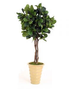 7' Fiddle Leaf Tree in Mustard Glazed Stoneware Planter