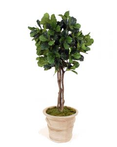 7' Fiddle Leaf Tree in Brown Garden Pot