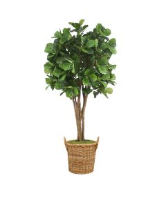 8' Fiddle Leaf Fig Tree in Round Basket with Handles