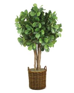 8' Fiddle Leaf Tree in Stained Round Core Rattan Basket with Handles
