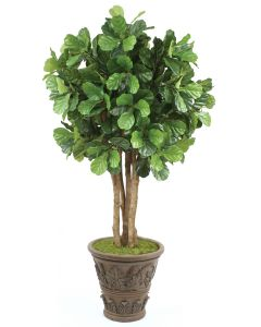 8' Fiddle Leaf Tree in Cedarwood Finish Fiberglass Garden Planter