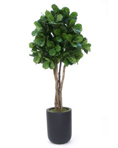 8' Fiddle Leaf Tree in Tall Round Black Fiberstone Planter