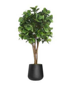 8' Fiddle Leaf Tree in Black Fiberstone Planter