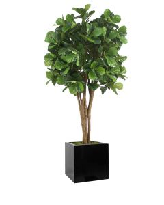 8' Fiddle Leaf Tree in Block Planter