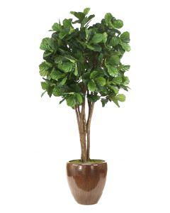 8' Fiddle Leaf Fig Tree in Glazed Mocha Stoneware Pot