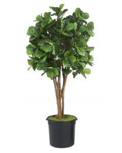 8' Fiddle Leaf Fig Tree in Liner
