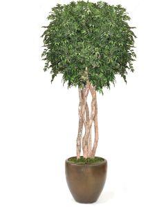 10' Ruscus Tree On Gnarly Trunks in Metallic Bronze Stoneware Pot