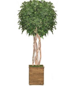 10' Ruscus Tree in Tall Square Stained Wood Planter