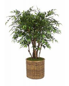 4' Ruscus Tree in Stained Basket