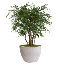 4' Ruscus Tree in White Gray Wash Oval Tapered Concrete Planter