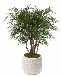 4' Ruscus Tree in Large White Gabi Planter