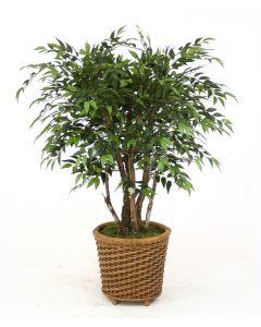 4' Ruscus Tree in Oval Wicker Basket