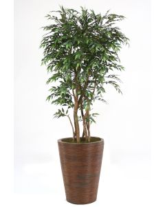 6' Ruscus Tree in Tapered Rattan Basket