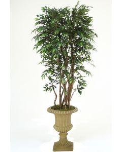 6' Ruscus Tree in Tan Resin Classic Urn