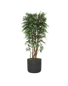 "6"" Ruscus Tree in Black Wash Charlie Pot"