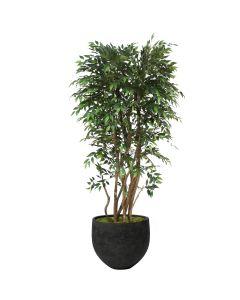 "6"" Ruscus Tree in Black Mini Orb Pot"