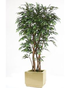 6' Ruscus Tree in Square Glazed Ivory Stoneware Planter