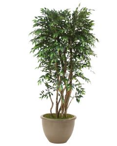 6' Ruscus Tree in Brown Rimmed Stoneware Planter