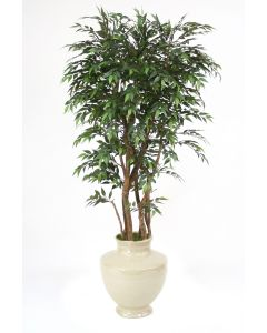 6'Ruscus Tree in Shellish Sand Earthenware  Planter