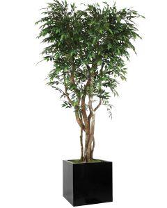 7' Ruscus Tree in Block Planter