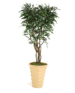 7' Ruscus Tree in Mustard Glazed Stoneware Planter