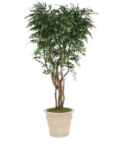 7' Ruscus Tree in Brown Clay Garden Planter