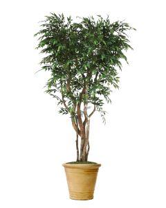 7' Ruscus Tree On Gnarly Trunks in Sierra Beige Fiberglas Patio Pot