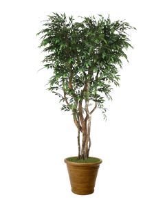 7' Ruscus Tree On Gnarly Trunks in Tuscan Brown Fiberglass Patio Pot