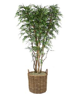 8' Ruscus Tree in Stained Round Core Rattan Basket with Handles