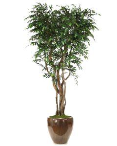 8' Ruscus Tree On Gnarly Trunks in Mocha Glazed Stoneware Pot