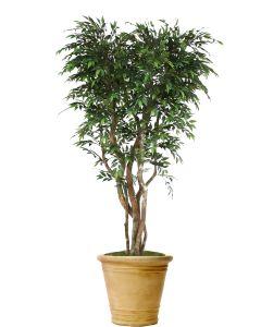 8' Ruscus Tree in Sierra Beige Garden Planter