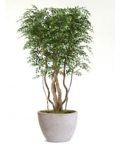 9' Ruscus Tree in White-Gray Washed Oval Tapered Concrete Planter