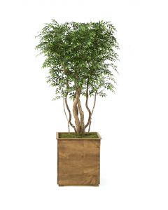 9' Ruscus Tree in Tall Square Stained Wood Planter
