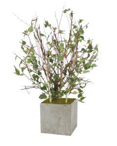 4' Birch Tree in Light Anthraacite Square Concrete Planter
