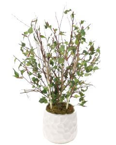 4' Birch Tree in White Gabi Planter