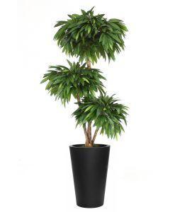 7' Layered Mango Tree in Tall Black Fiberstone Planter