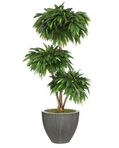 6' Layered Mango in Dark Grey Vertically Ridge Planter