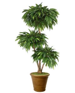 6' Layered Mango Tree in Tuscan Brown Patio Pot